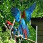Oiseaux Zoo Pont-Scorff